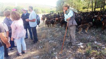 Iniciativas cooperativas e comunitárias na Serra dos Candeeiros